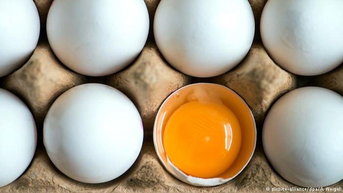 عرضه تخم مرغ با قیمت ۴۲۵۰۰ تومان از امروز